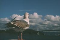 http://virguleflottante.com/files/gimgs/th-27_pigeon4.jpg