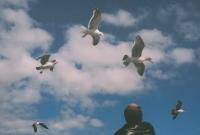 http://virguleflottante.com/files/gimgs/th-27_pigeon7.jpg