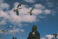 http://virguleflottante.com/files/gimgs/th-27_pigeon8.jpg